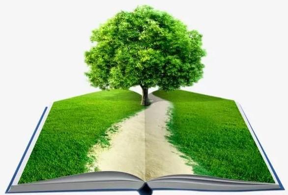 Белгородцы спасли почти 4000 деревьев